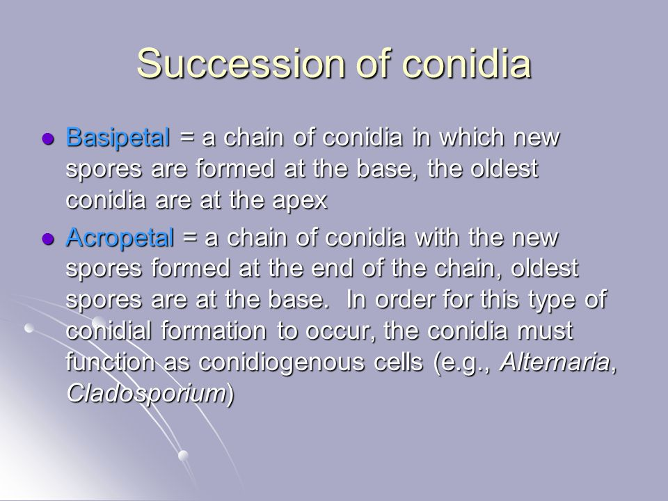 Succession of conidia Basipetal = a chain of conidia in which new spores are formed at the base, the oldest conidia are at the apex.