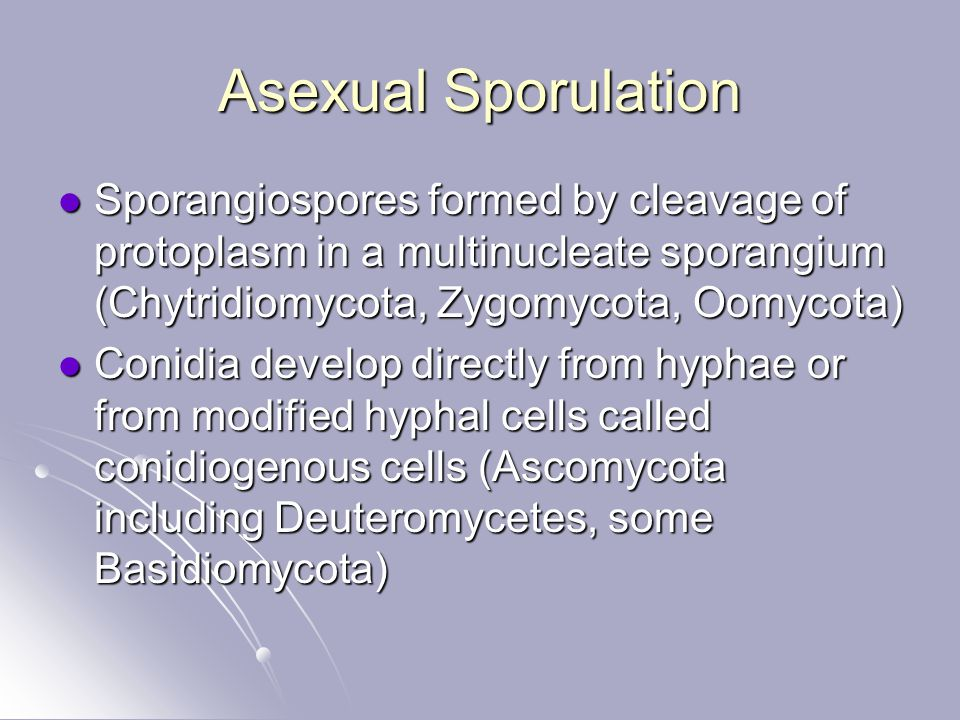 Asexual Sporulation Sporangiospores formed by cleavage of protoplasm in a multinucleate sporangium (Chytridiomycota, Zygomycota, Oomycota)