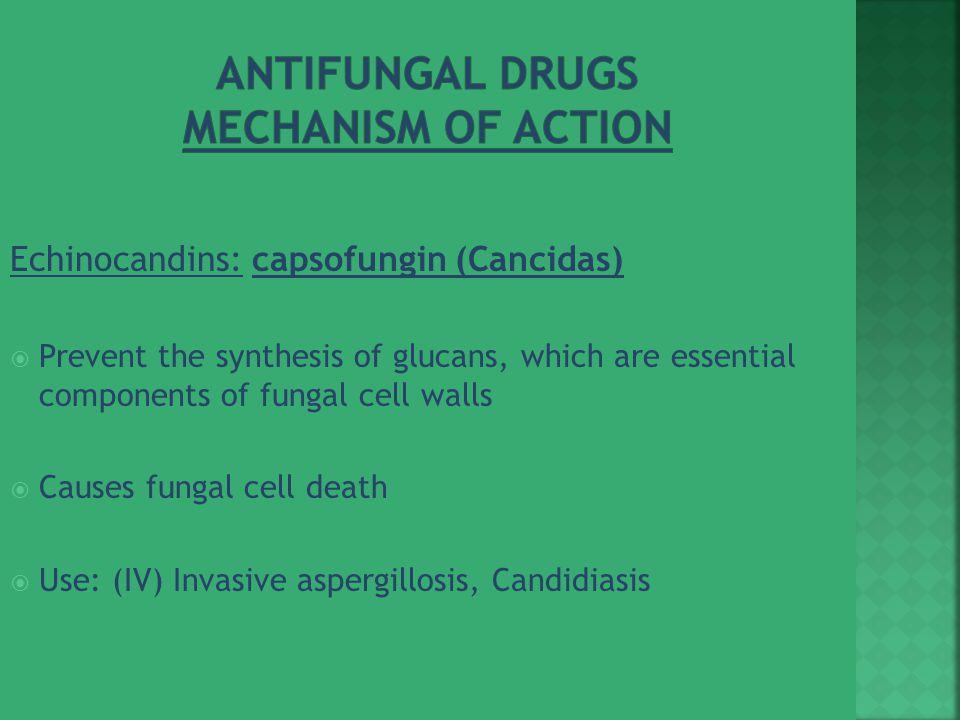 Antifungal Drugs Mechanism of Action