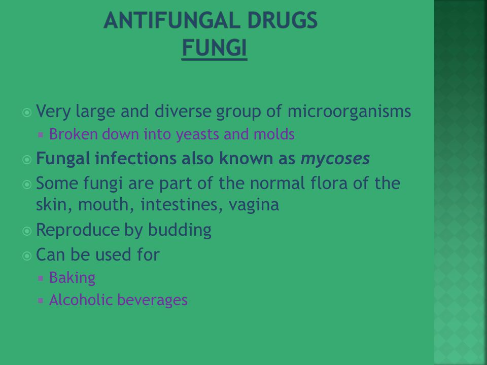 Antifungal Drugs Fungi