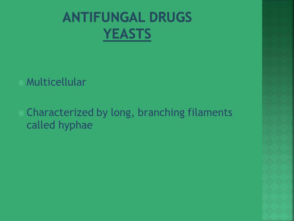 Antifungal Drugs Yeasts