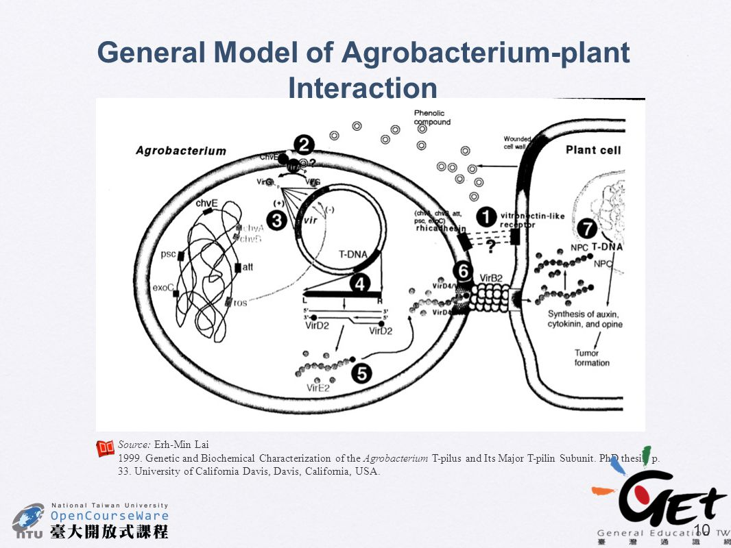 General Model of Agrobacterium-plant Interaction