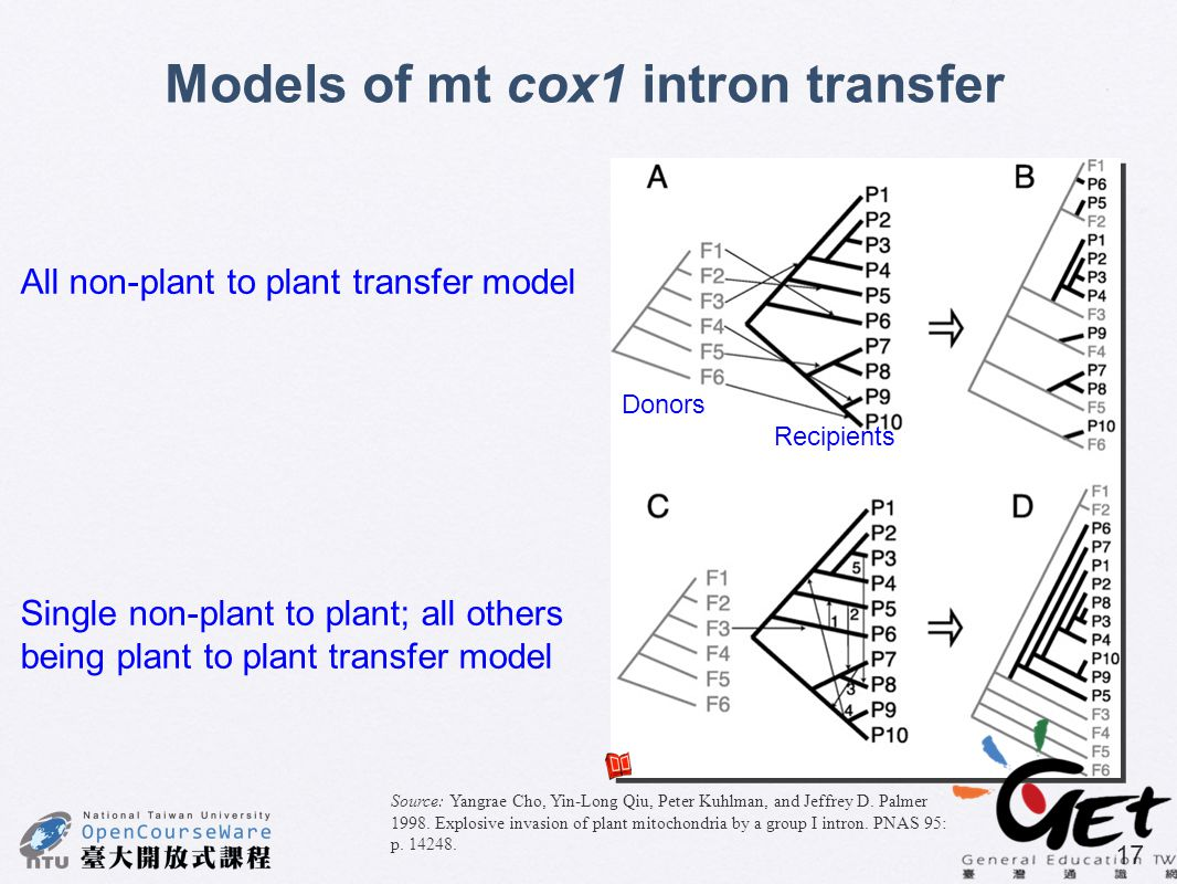 Models of mt cox1 intron transfer