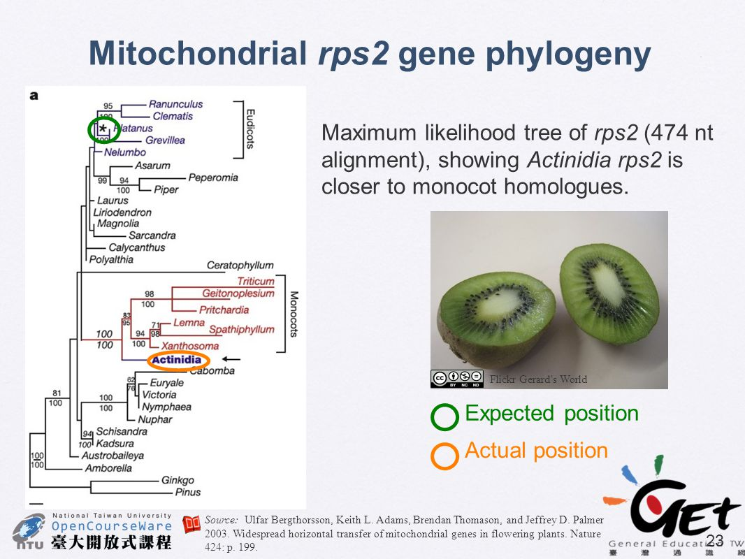 Mitochondrial rps2 gene phylogeny