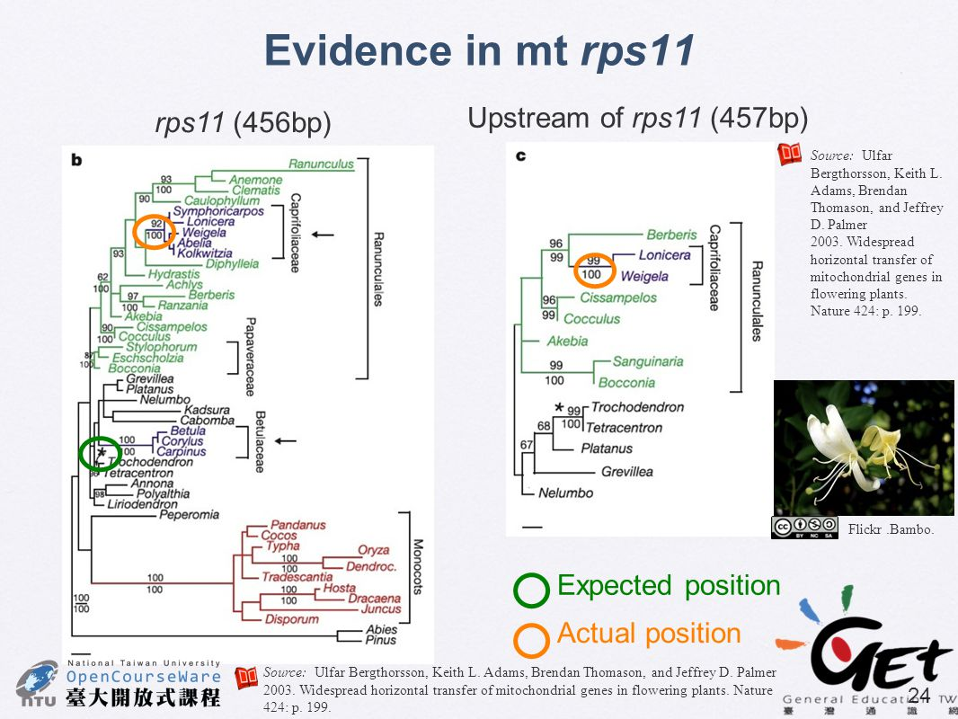Evidence in mt rps11 Upstream of rps11 (457bp) rps11 (456bp)