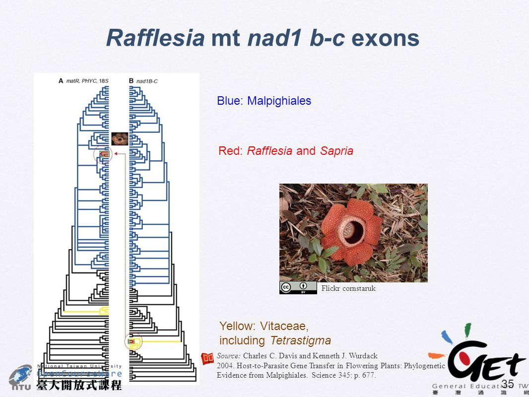 Rafflesia mt nad1 b-c exons