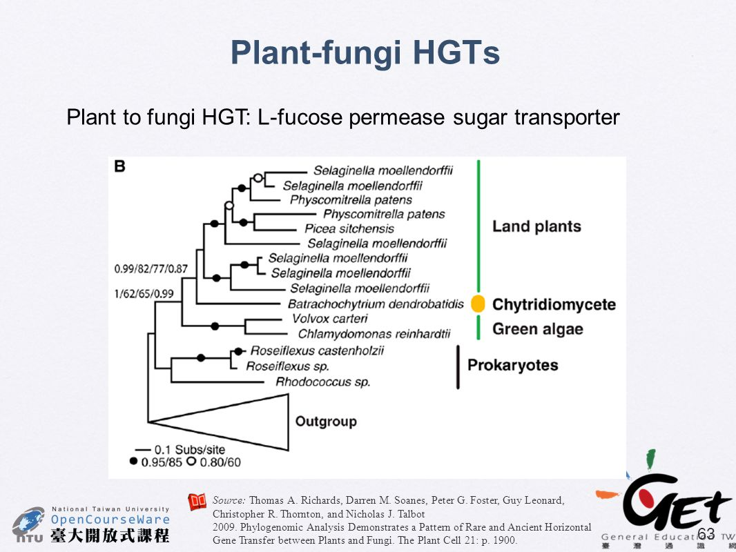 Plant-fungi HGTs Plant to fungi HGT: L-fucose permease sugar transporter.