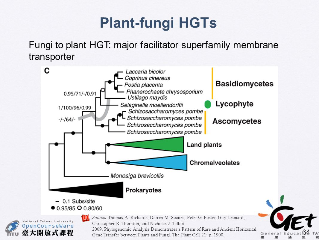 Plant-fungi HGTs Fungi to plant HGT: major facilitator superfamily membrane transporter.