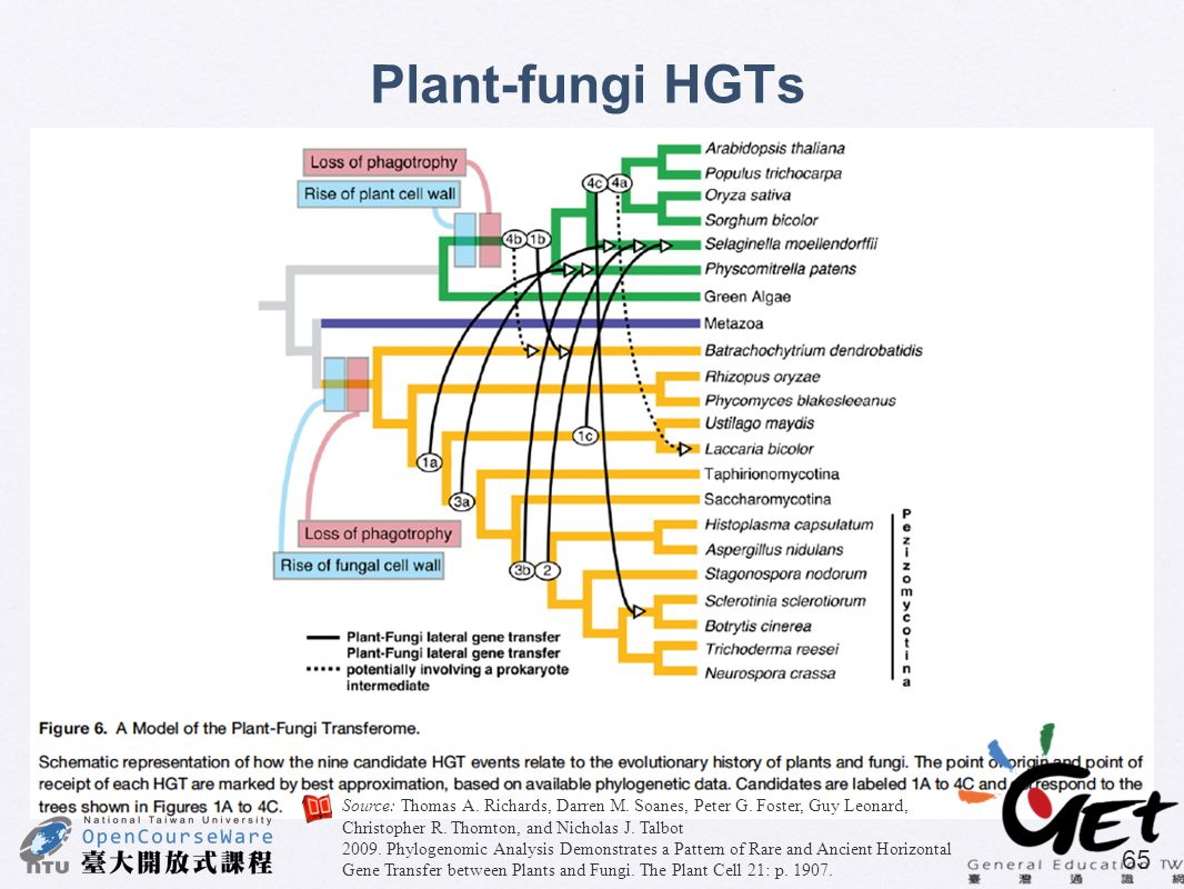 Plant-fungi HGTs Source: Thomas A. Richards, Darren M. Soanes, Peter G. Foster, Guy Leonard, Christopher R. Thornton, and Nicholas J. Talbot.