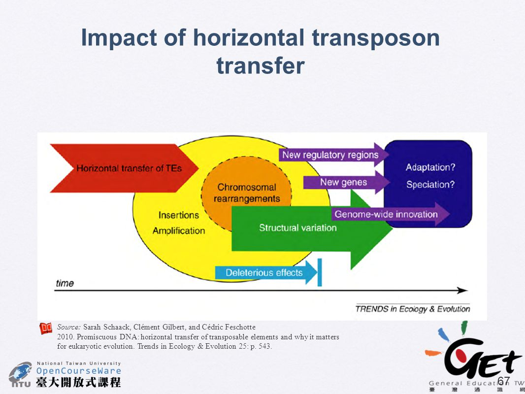 Impact of horizontal transposon transfer