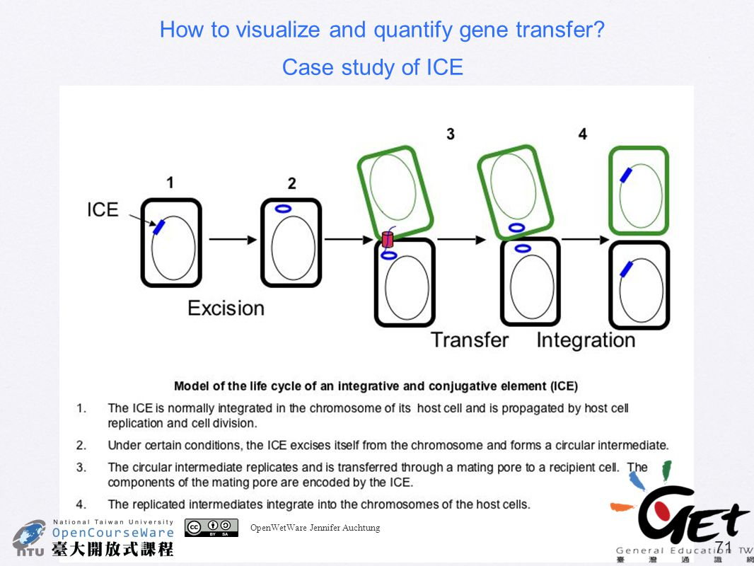 How to visualize and quantify gene transfer