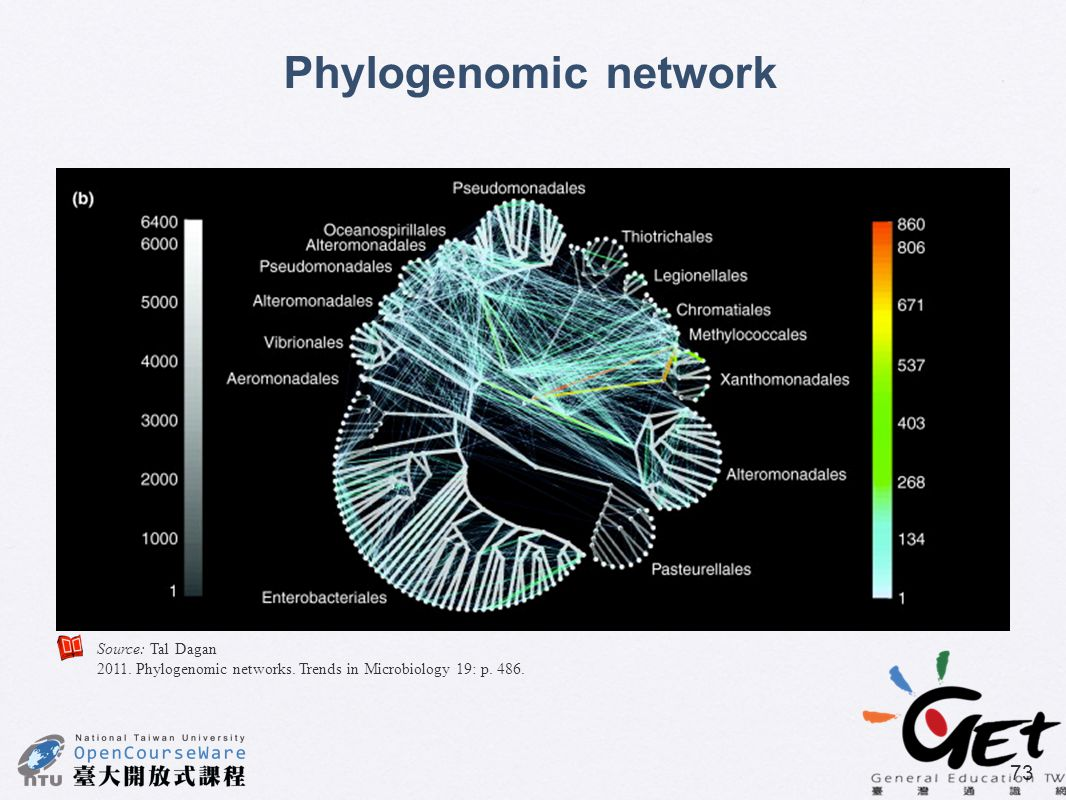 Phylogenomic network Source: Tal Dagan