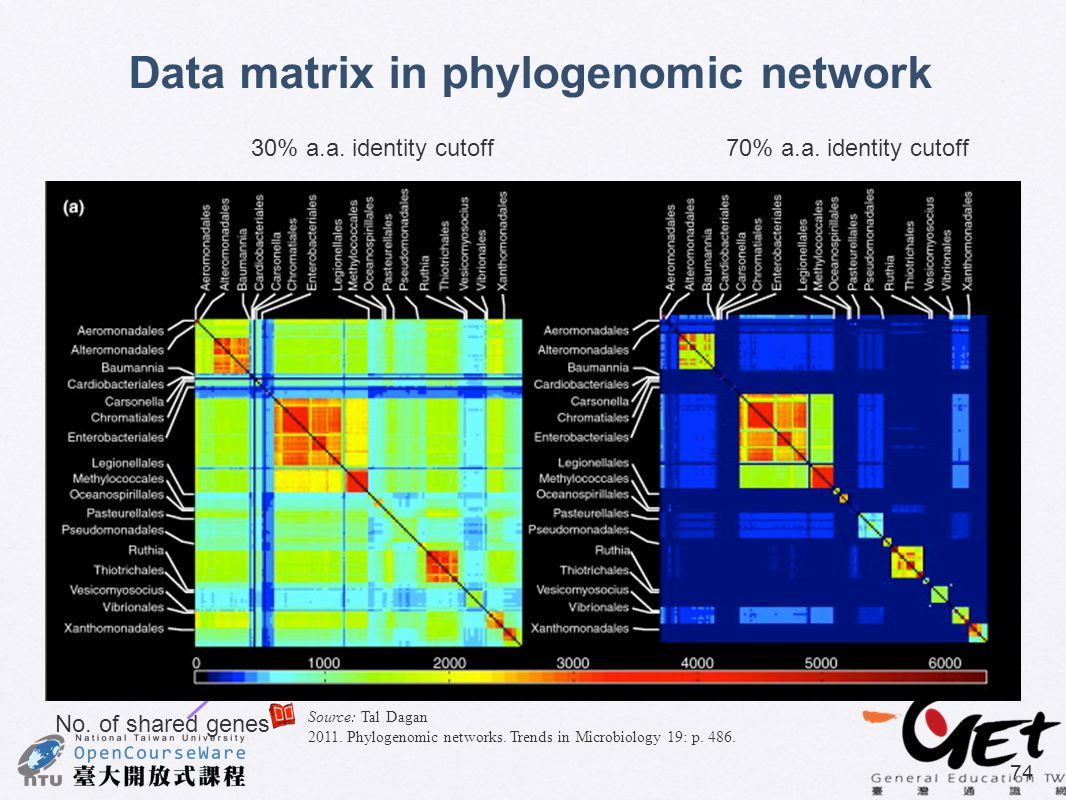 Data matrix in phylogenomic network