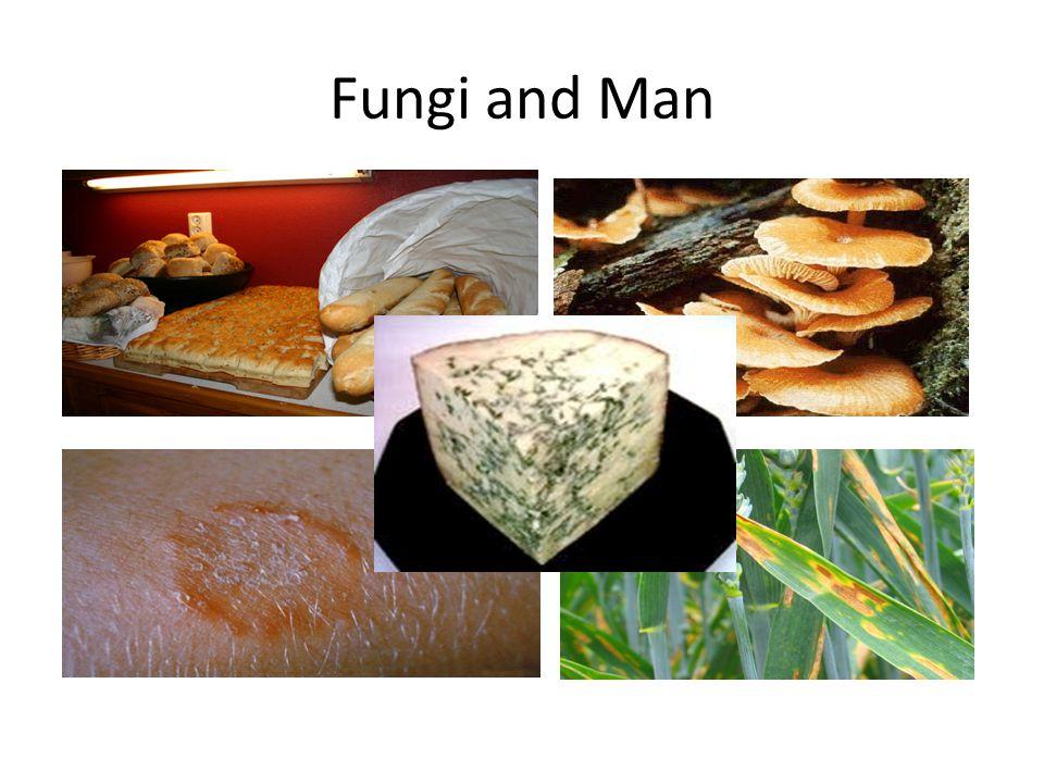 Fungi and Man