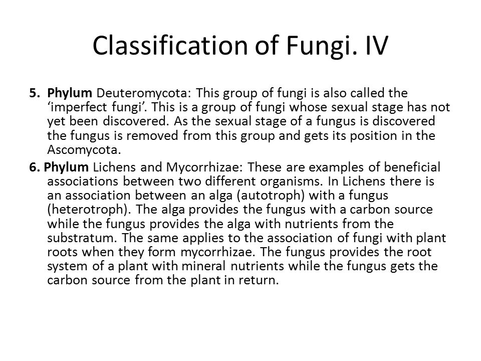 Classification of Fungi. IV