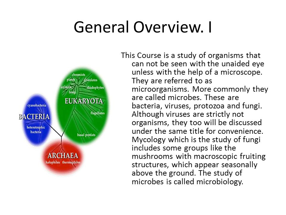 General Overview. I