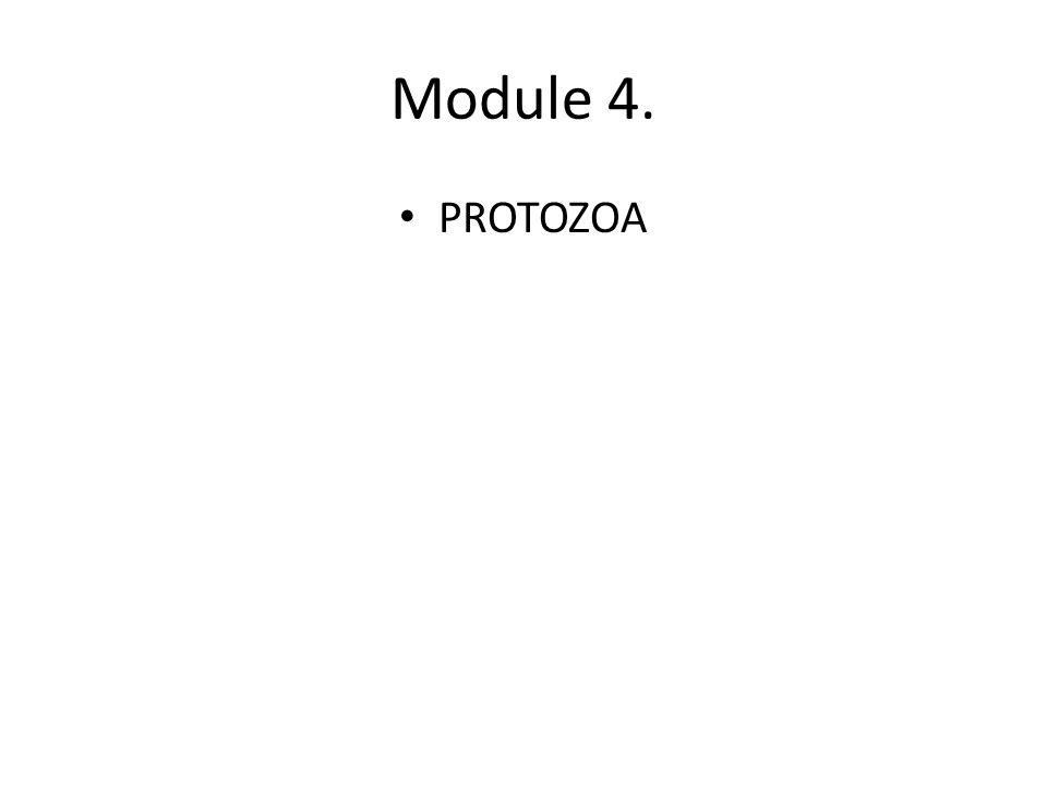 Module 4. PROTOZOA