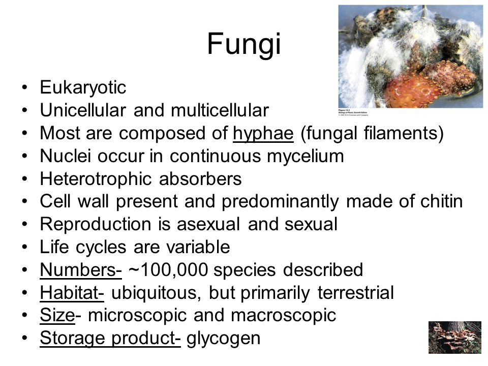 Fungi Eukaryotic Unicellular and multicellular