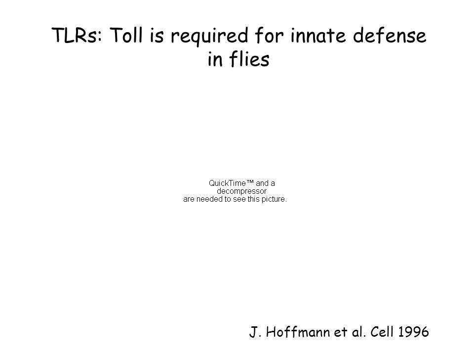 TLRs: Toll is required for innate defense in flies