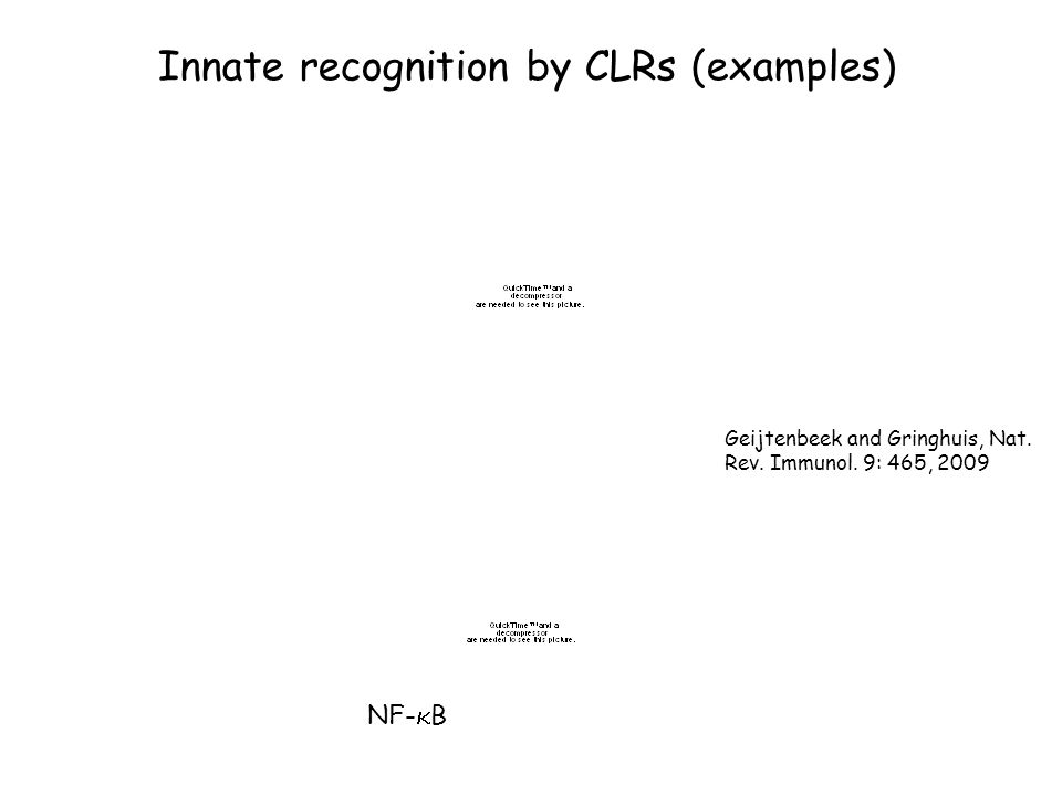Innate recognition by CLRs (examples)