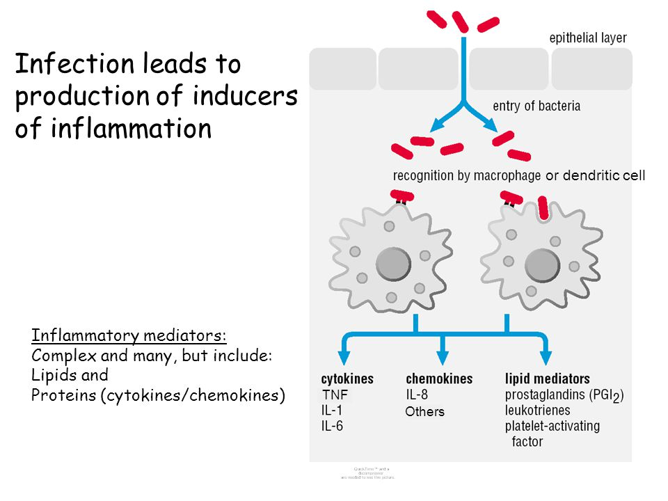 Infection leads to production of inducers of inflammation