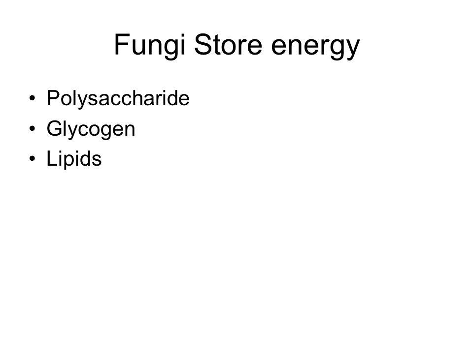 Fungi Store energy Polysaccharide Glycogen Lipids
