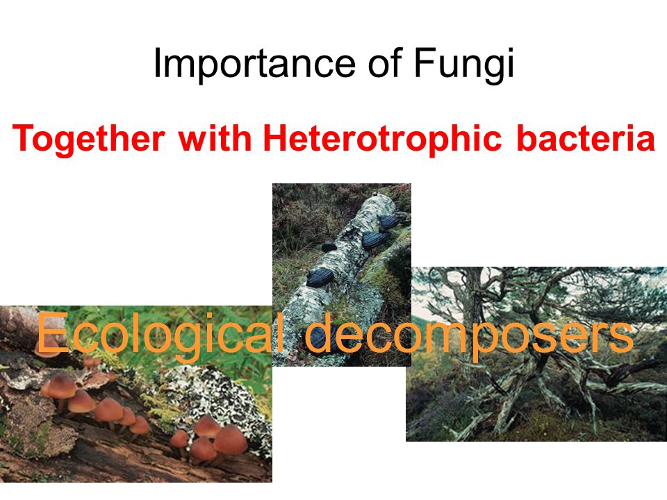 Ecological decomposers