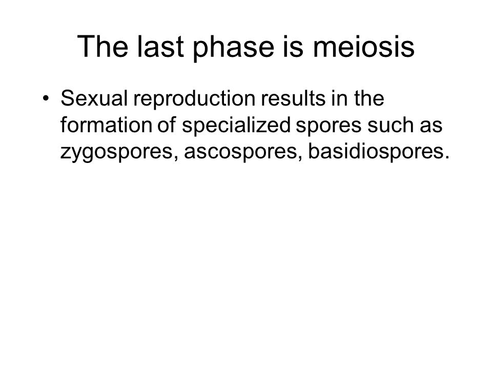 The last phase is meiosis