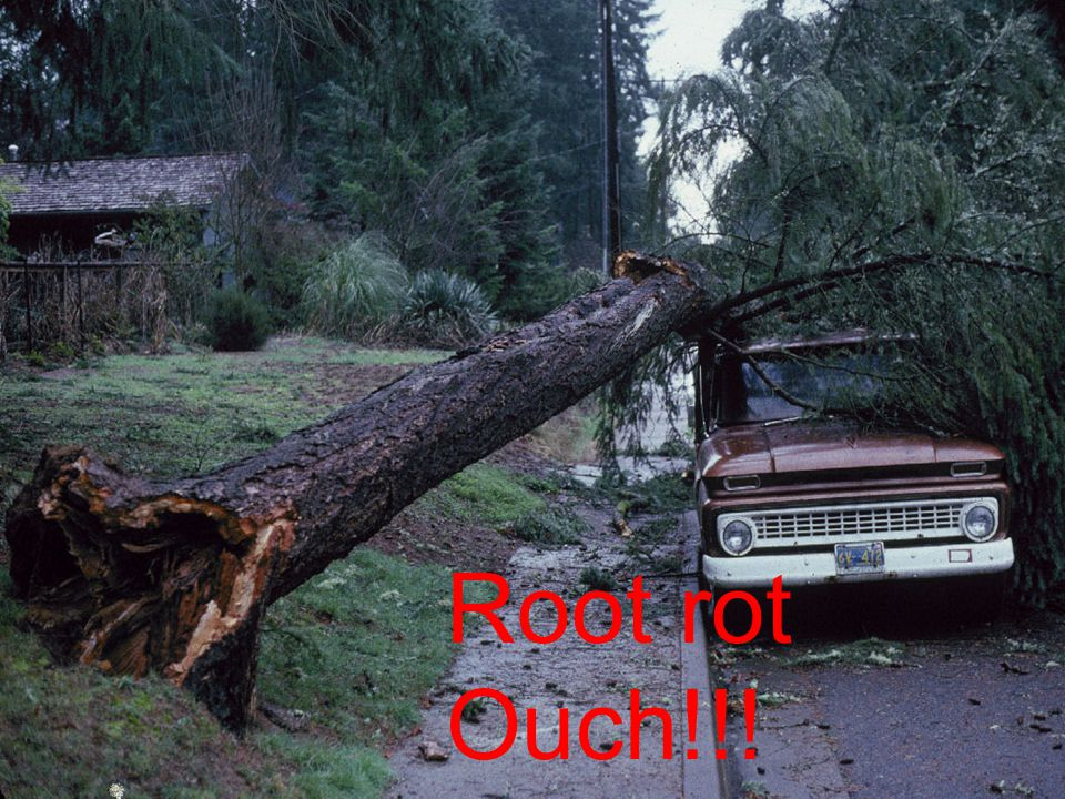 Root rot Ouch!!!
