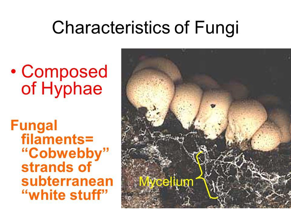 Characteristics of Fungi