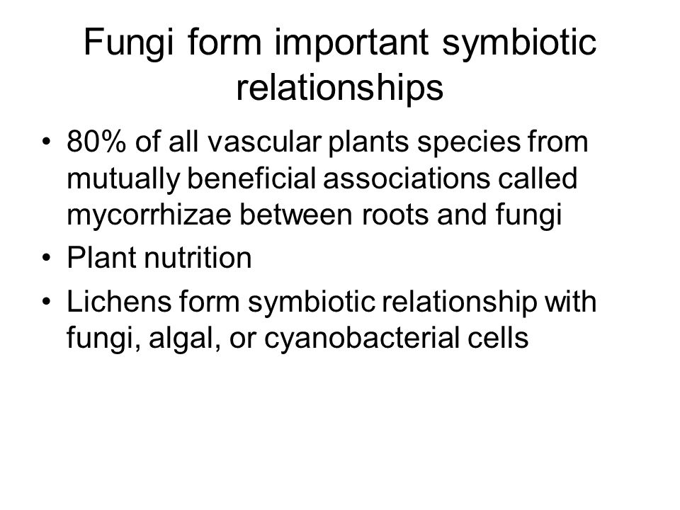 Fungi form important symbiotic relationships