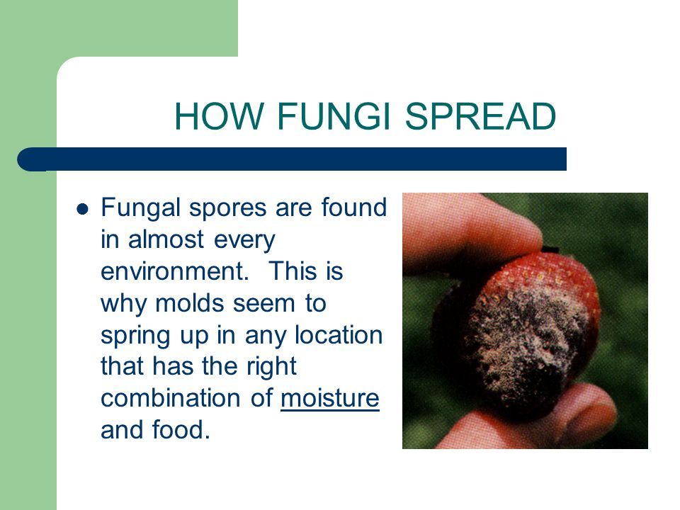 HOW FUNGI SPREAD