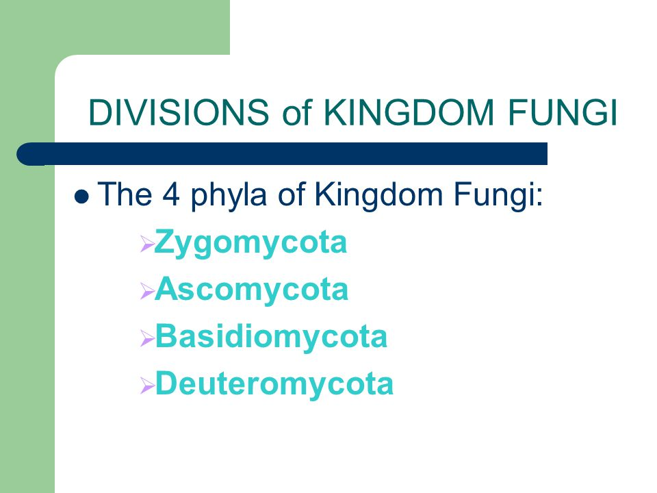 DIVISIONS of KINGDOM FUNGI