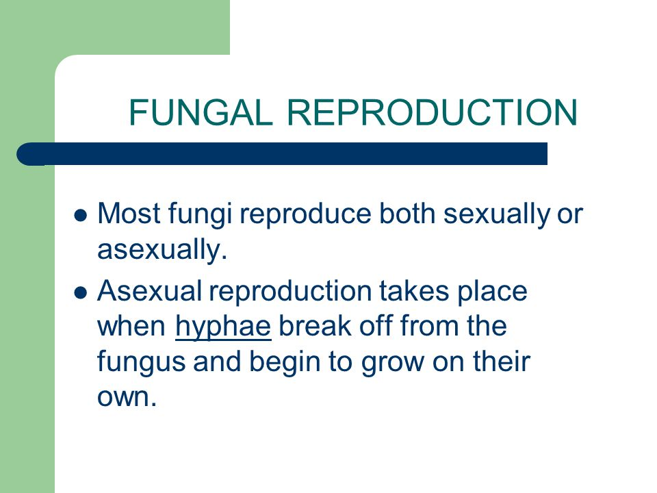 FUNGAL REPRODUCTION Most fungi reproduce both sexually or asexually.