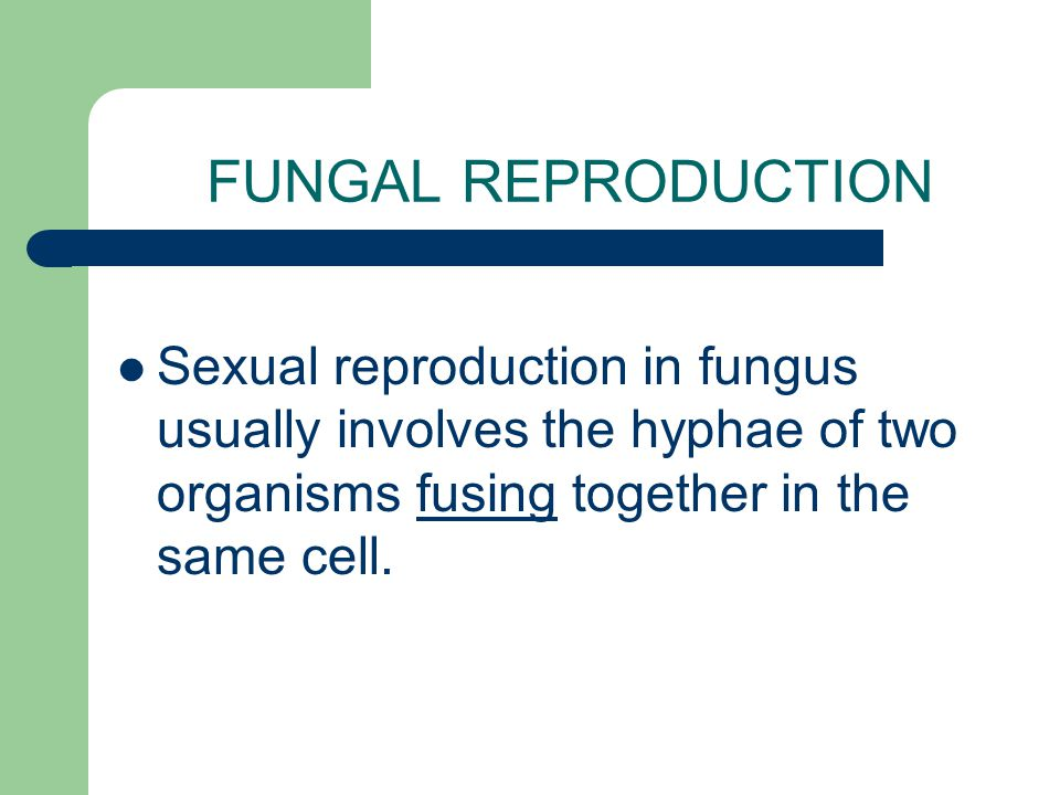 FUNGAL REPRODUCTION Sexual reproduction in fungus usually involves the hyphae of two organisms fusing together in the same cell.