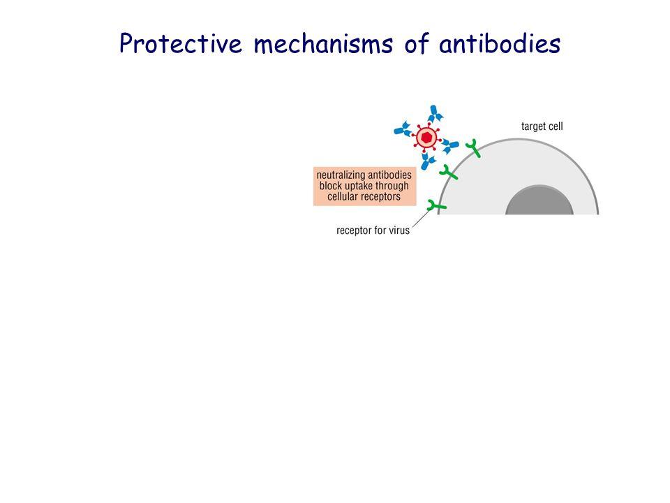 Protective mechanisms of antibodies