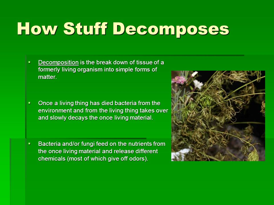 How Stuff Decomposes Decomposition is the break down of tissue of a formerly living organism into simple forms of matter.