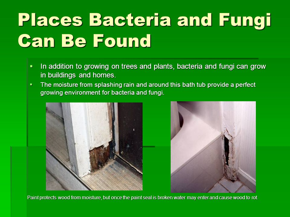Places Bacteria and Fungi Can Be Found