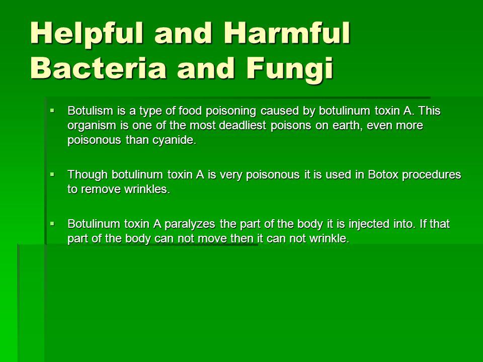 Helpful and Harmful Bacteria and Fungi