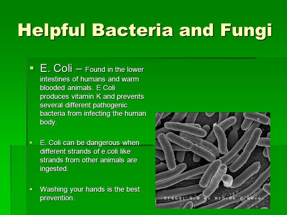Helpful Bacteria and Fungi