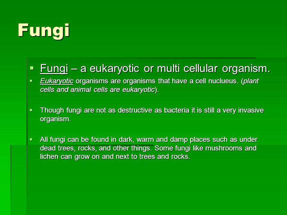 Fungi Fungi – a eukaryotic or multi cellular organism.