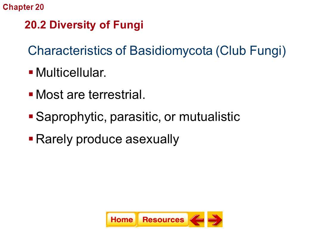Characteristics of Basidiomycota (Club Fungi)