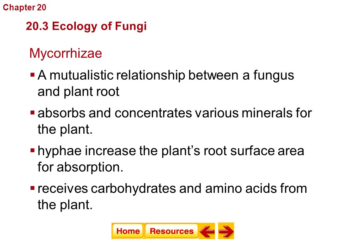 mycorrhizae are mutualistic relationship between the roots of plants and