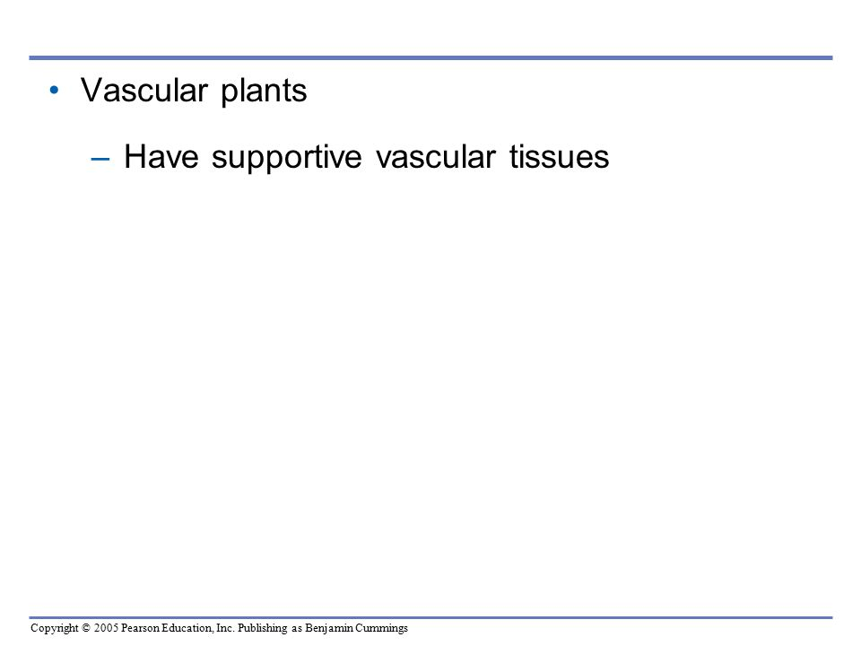 Vascular plants Have supportive vascular tissues