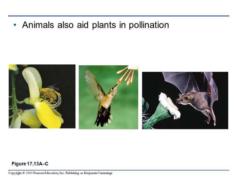Animals also aid plants in pollination