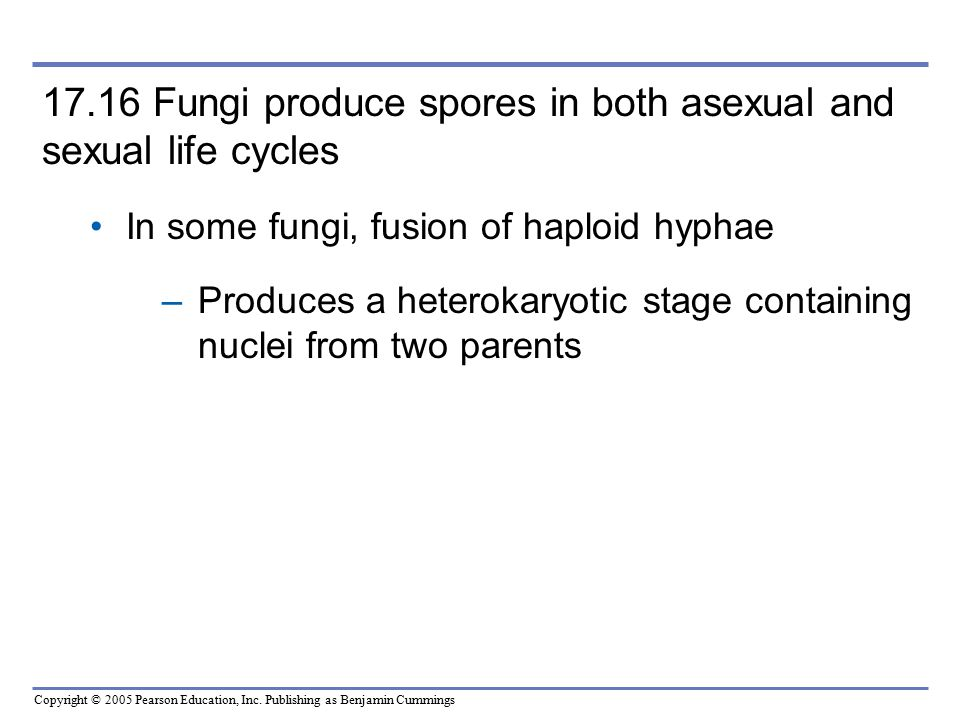 17.16 Fungi produce spores in both asexual and sexual life cycles