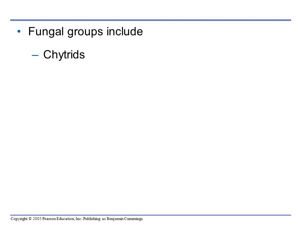 Fungal groups include Chytrids