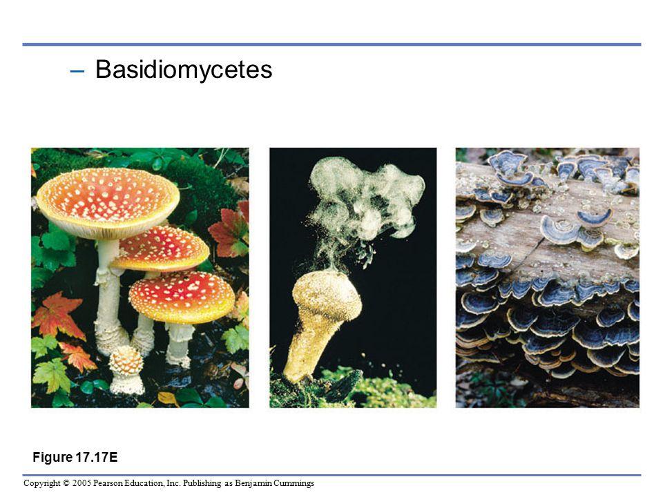 Basidiomycetes Figure 17.17E