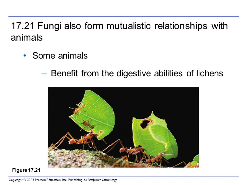 17.21 Fungi also form mutualistic relationships with animals
