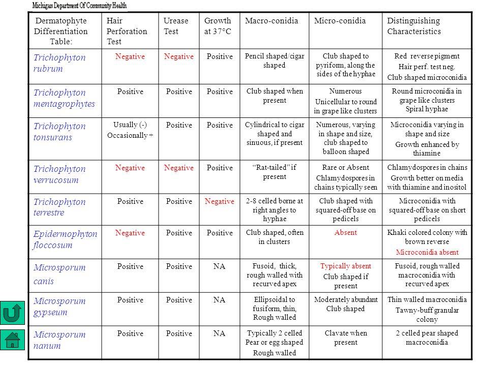Dermatophyte Differentiation Table: